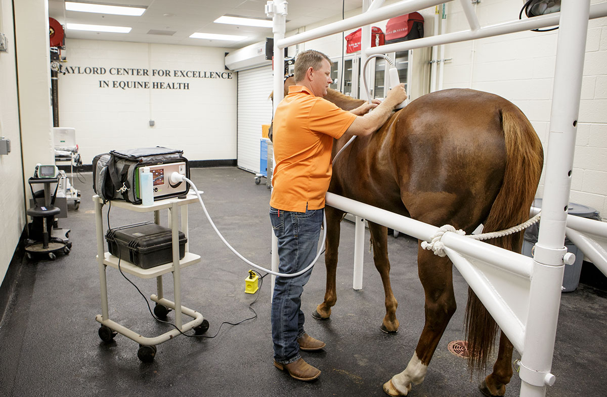 Gaylord Center for Excellence in Equine Health | Center For